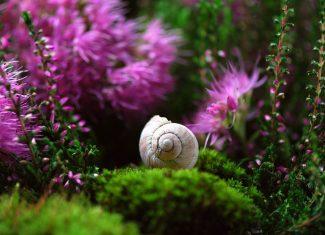 Movimiento Slow Life en Izargi